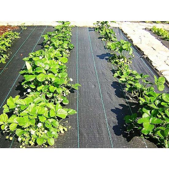 Agroszövet 100 g/m2 Fekete 520cmx25m