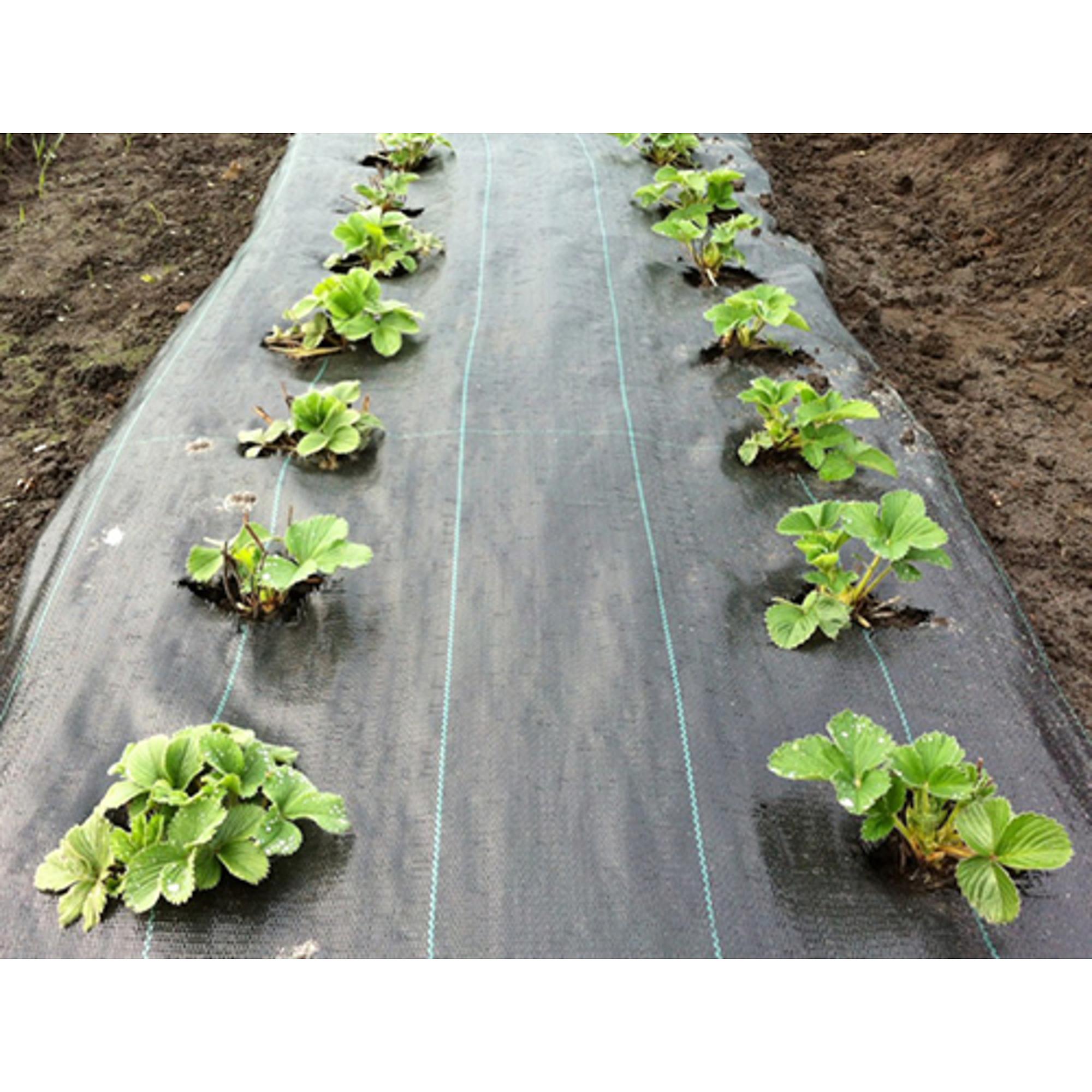 Agroszövet 100 g/m2 Fekete 520cmx100m