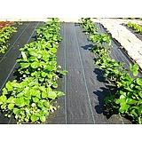 Agroszövet 100 g/m2 Fekete 105cmx25m