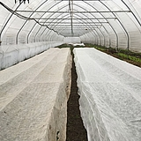 Fátyolfólia 1,6x5m