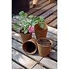 Nortene GROWING POTS tőzegcserép  - 8 x 8 cm  -  világosbarna - 160003